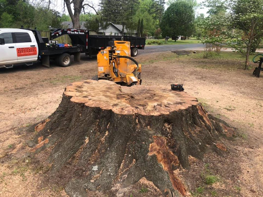 Do You Have a Stump to Grind?