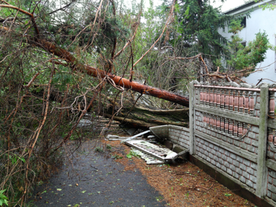 Has a Storm Uprooted Your Trees?